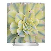Succulent Aeonium Sunburst Shower Curtain