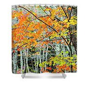 Sugar Maple Acer Saccharum In Autumn Shower Curtain