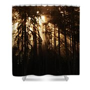 Sultry Morning Radiance Shower Curtain
