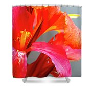 Summer Lilly Pink Shower Curtain