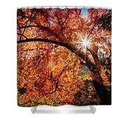 Sun Peaking Through The Autumn Colors  Shower Curtain
