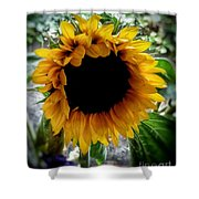 Sunflower 2 Shower Curtain