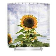 Sunflower Days Shower Curtain