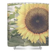Sunflower Haze Shower Curtain