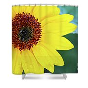 Sunflower- Shine On Me Shower Curtain
