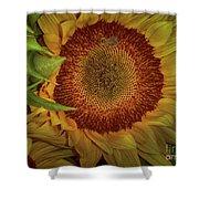 Sunflower Splendor Shower Curtain by Judy Hall-Folde