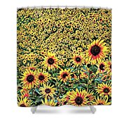 Sunflowers In Kansas Shower Curtain