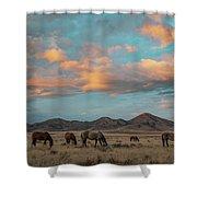 Sunrise Beauty Shower Curtain