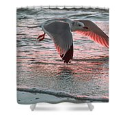 Sunset Glide Shower Curtain