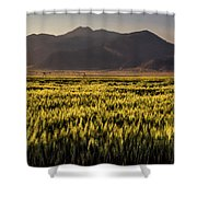 Sunset Over Wheat Shower Curtain