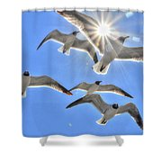 Sunshine And Seagulls Shower Curtain