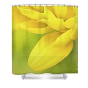 Sunshine Petals Shower Curtain