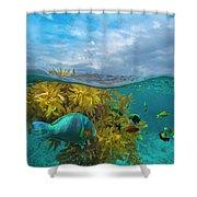 Surf Parrotfish, Damselfish And Basslet Shower Curtain