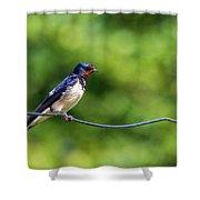 Swallow  Hirundo Rustica  Shower Curtain