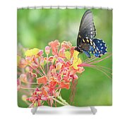 Swallowtail Butterfly Wings  Shower Curtain