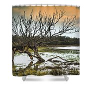 Swamp And Dead Tree Shower Curtain