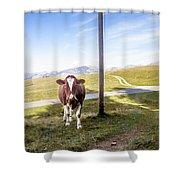 Swiss Cow Shower Curtain