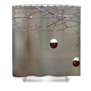 Sycamore Snowbells  Shower Curtain