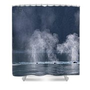 Synchronized Swimming Humpback Whales Alaska Shower Curtain by Nathan Bush