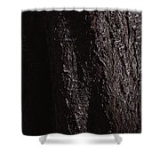 Tallest Tree Shower Curtain