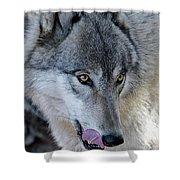 Tasty Wolf Shower Curtain
