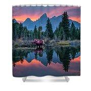 Teton Moose Shower Curtain