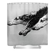 The Borzois, Black And White Sketch, 3 Russian Wolfhounds Shower Curtain