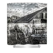 The Cows Came Home Black And White Shower Curtain