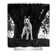 The Dog And The Tree Shower Curtain