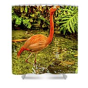 The Flamingo Shower Curtain