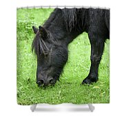 The Grass Is Greener Here. The Black Pony Shower Curtain
