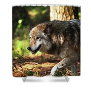 The Gray Wolf Shower Curtain