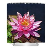 The Lady Is Pink 02 Shower Curtain by Arik Baltinester