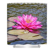 The Lady Is Pink 03 Shower Curtain by Arik Baltinester