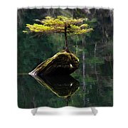 The Little Tree On Fairy Lake 5 Shower Curtain