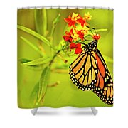 The Monarch Butterfly Shower Curtain
