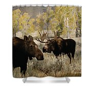 The Moose Rut Shower Curtain