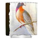 The Passenger Pigeon  Shower Curtain