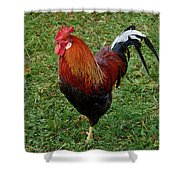 The Pose Of The Rooster Shower Curtain