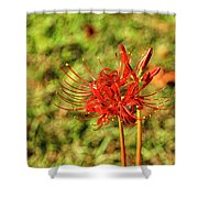 The Spider Lily Shower Curtain