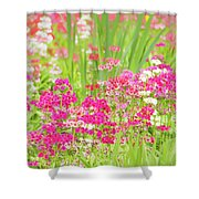 The World Laughs In Flowers - Primula Shower Curtain