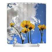 Things Are Looking Up - Wide Format Shower Curtain