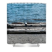 Three Gulls On A Log Shower Curtain