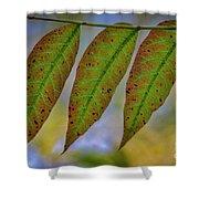Three Leaves Shower Curtain