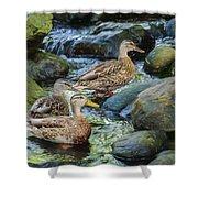 Three Mallard Ducks Swimming In A Stone Filled Brook. Shower Curtain