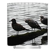 Three Seagulls On A Log Shower Curtain
