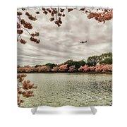 Tidal Basin Blossoms Shower Curtain