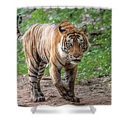 Tiger On A Stroll Shower Curtain