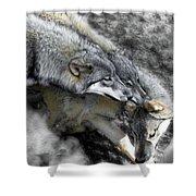 Timber Wolves Up Close Shower Curtain