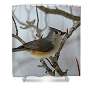 Titmouse Winter Morning Cutie  Shower Curtain